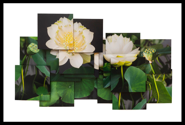 Lotus Revival