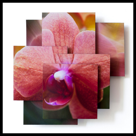 Passionate Orchid.jpg