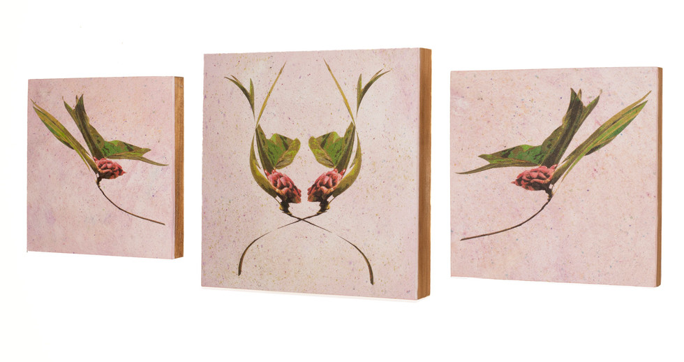 Back Together-a triptych of magnolia seedpods