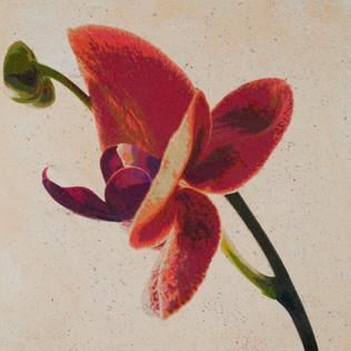 Orchid Flight