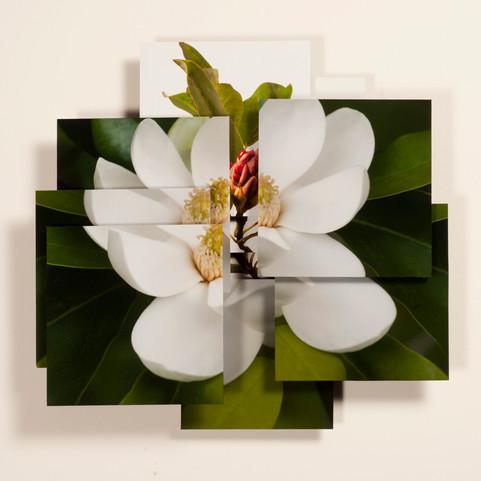 Magnolia Series-