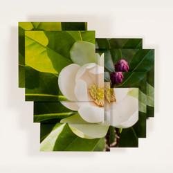 Magnolia Series 7