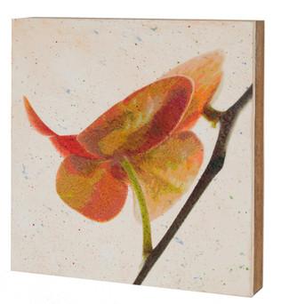 Orchid Flight 2