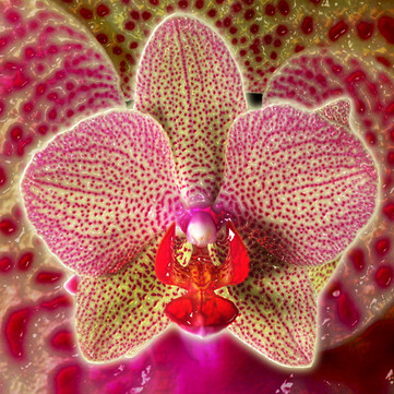 Orchid_01NF.jpg