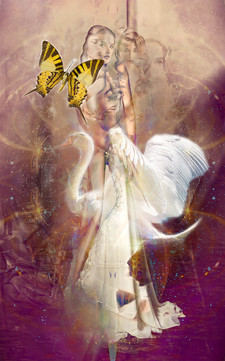 DD_00493-The Light Swan.jpg