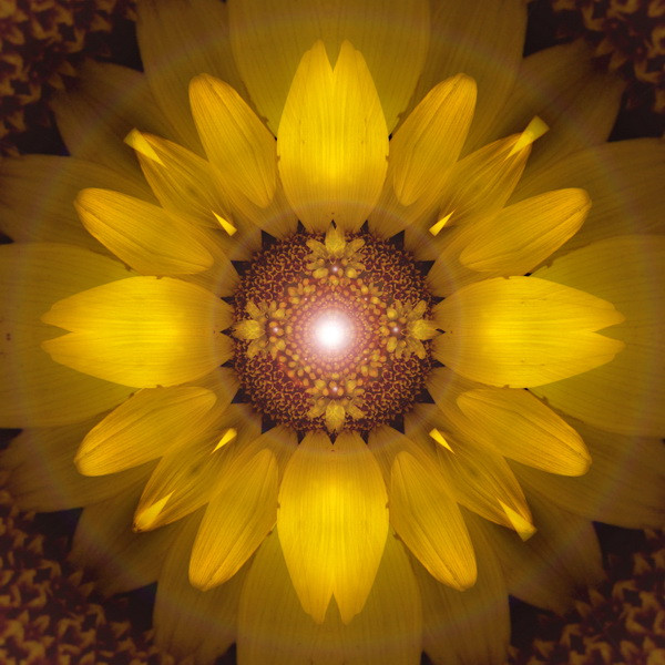 Sunflower_02NF.jpg