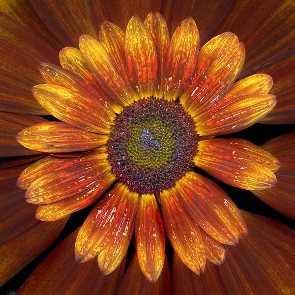 Sunflower_03NF.jpg