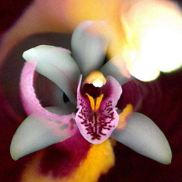 Orchid_02NF.jpg