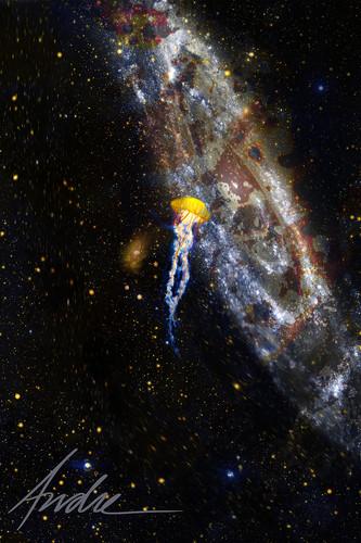 DD_00505-Galaxy and Jellyfish.jpg