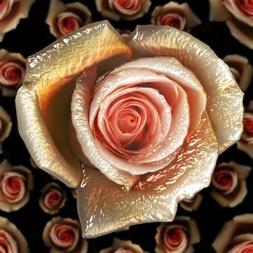 Rose_06NF.jpg