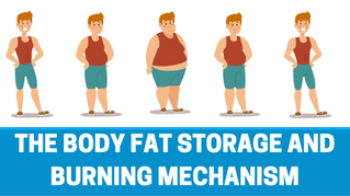 The 4 major metabolic factors that will help you lose weight.