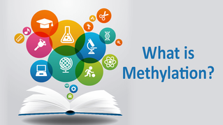 The key to healthy ageing, get the most out of Methylation.