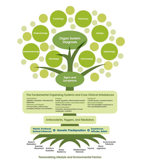 The-Functional-Medicine-Tree (002).jpg