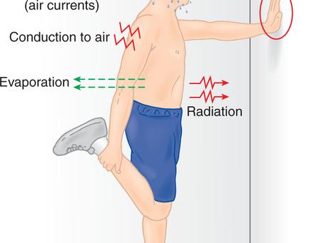 """Exercice en environnement chaud et humide. """"Les mécanismes de régulation"""". Partie : 1/2"""