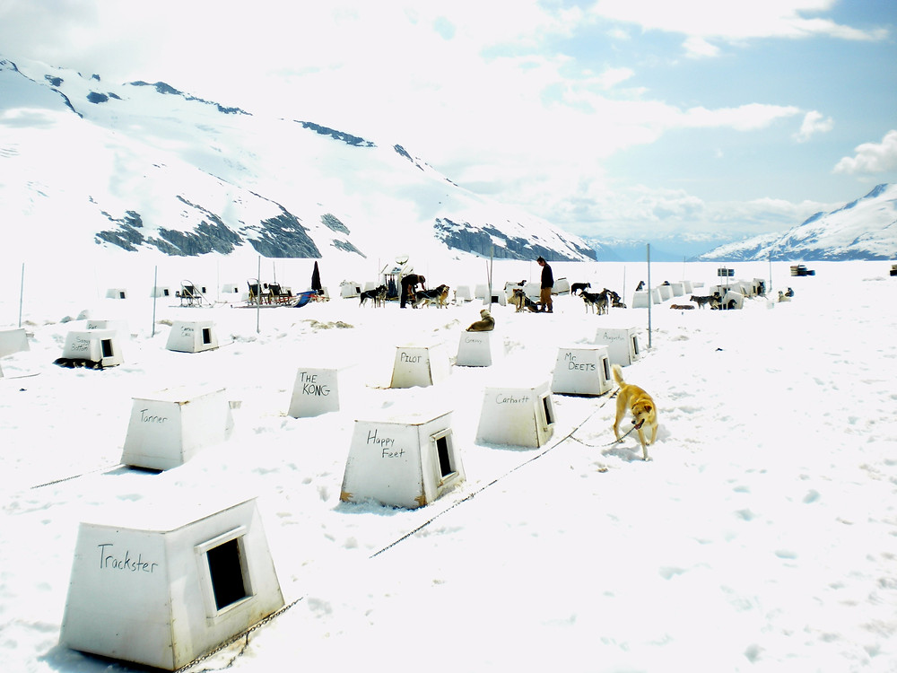 Dog huts on glacier