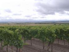 Weinviertel bei Retz