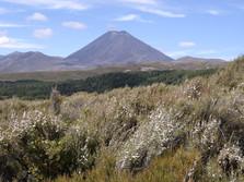 Tongariro Nationalpark 1