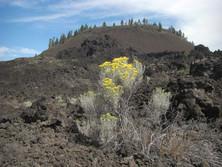 Aschevulkan in Oregon