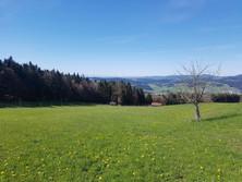 Mühlviertel bei Aigen-Schlägl - Blick nach Süden