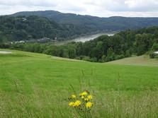 Kürnbergerwald bei Linz