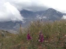 Mt. St. Helens 3