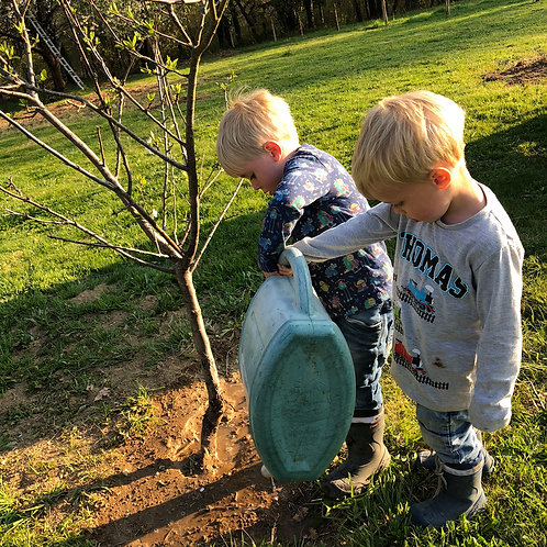 Adopt a Cherry, Plum, Apple, Pear, Walnut tree or Quince