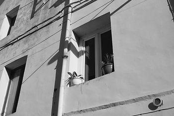 fenetre-plante.jpg