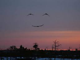 The smiling skies