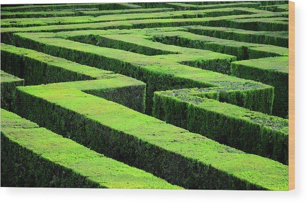 hedge-maze-in-barcelona-laberint-dhorta-marcel-germain