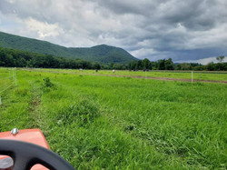 Lush Pasture