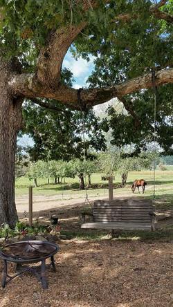 The Oak Swing