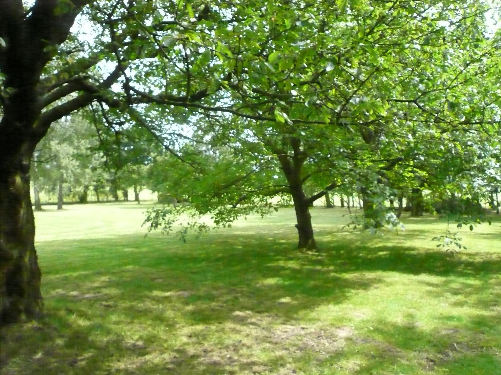 Tuin met kersenbomen