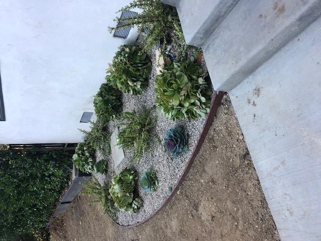 Succulent Plant Landscaping7
