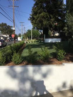 Natural Grass & Bush Landscaping2