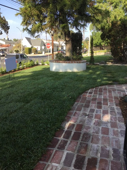 Natural Grass & Plants Landscaping2
