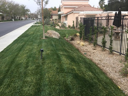 Natural Grass2