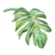 IanMikraz-Watercolor Palm-Leaves-02.png