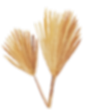 IanMikraz-Watercolor Palm-Leaves-05.png