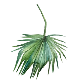 IanMikraz-Watercolor Palm-Leaves-01.png