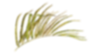 IanMikraz-Watercolor Palm-Leaves-04.png