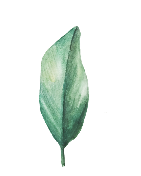 IanMikraz-Watercolor Palm-Leaves-06.png