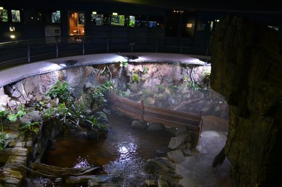 aquarium-tropical-de