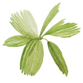 IanMikraz-Watercolor Palm-Leaves-10.png