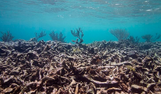 The Effects of Ocean Acidification on Marine and Human Life