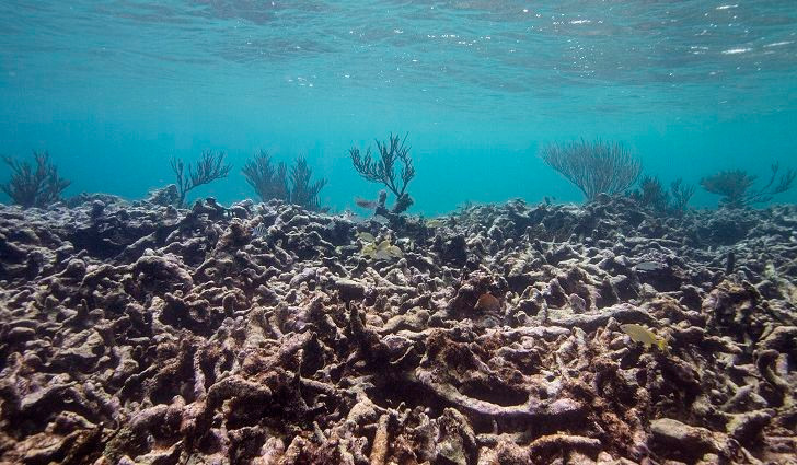 Death of Coral Reef