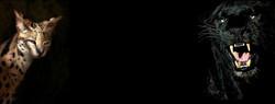 afrika bg 6.jpg