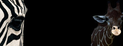 afrika bg 14.jpg