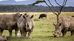 White Rhino Family IMG_2099 sm_edited.jpg