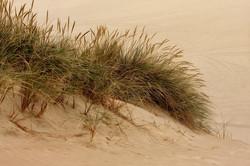 Grass and Dunes sm.jpg