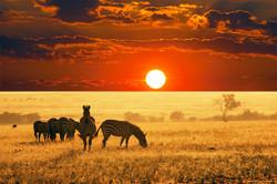 zebras-at-sunset.jpg